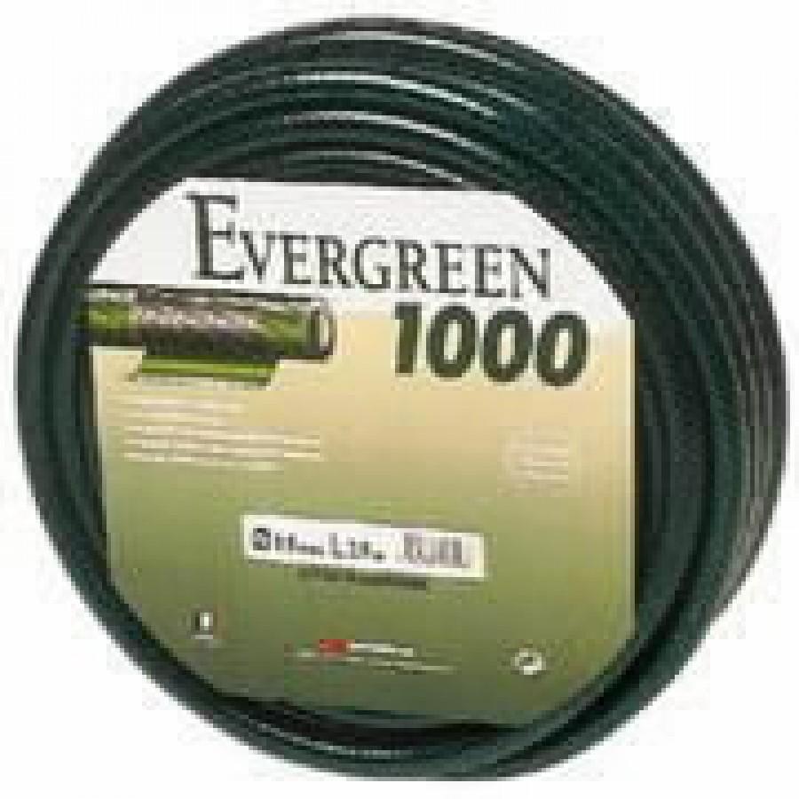 evergreenz