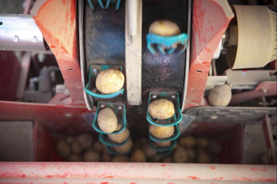 Potato planter  GL 430, wo crop protection, Grimme